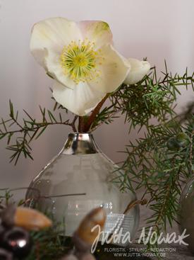 Adventsausstellung 2014 Jutta Nowak: Vase mit Christrose und Wacholder