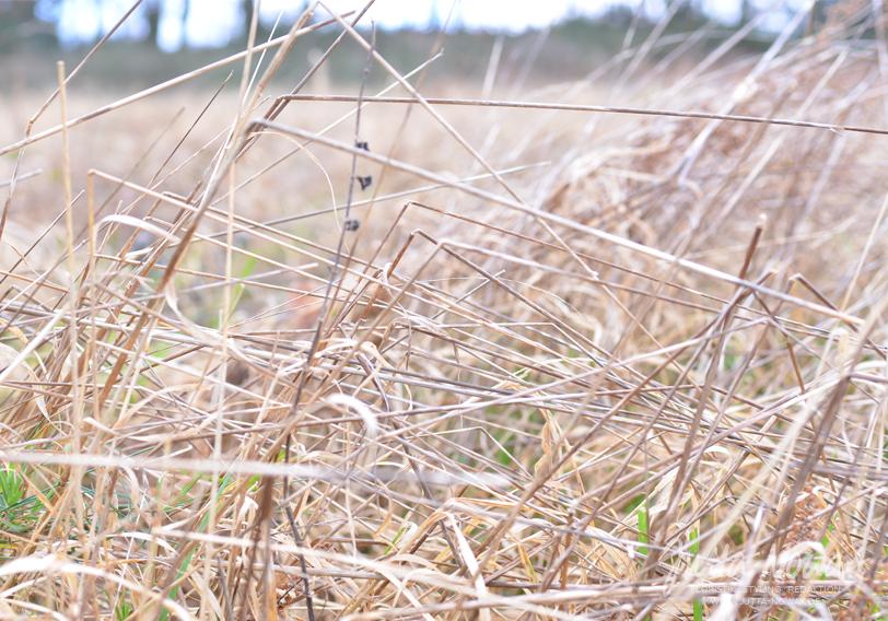 Jutta Nowak I Blog I 12 von 12 Januar 2016 I Outdoor I trockenes Gras